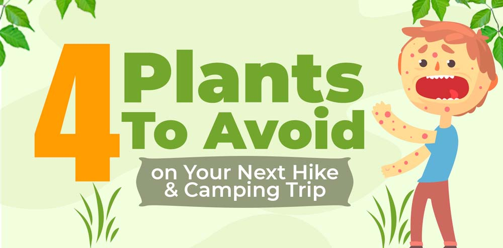 4 Plants to Avoid on Your Next Camping Trip