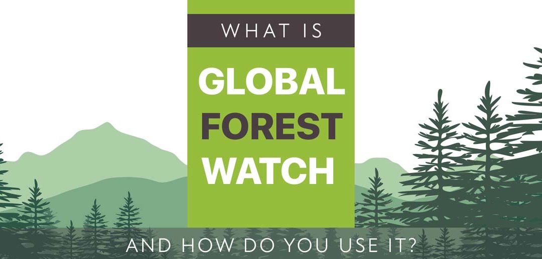 What Is Global Forest Watch and How To Use It
